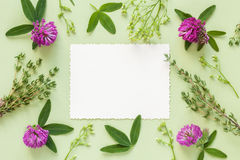 Old empty photo for the inside and frame of herbs and flowers Stock Photography