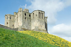 Old English Castle in Spring Surrounded by Yellow Daffodils. An old english city castle in spring. This medieval castle is surrounded by yellow daffodils Stock Images