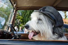 Old english sheep dog wearing a world war cap sitting in a vintage retro  car Royalty Free Stock Photos