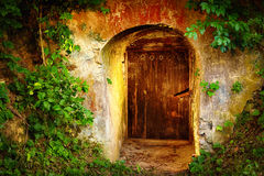 Old entrance door in forest. Wine cellar Royalty Free Stock Photo