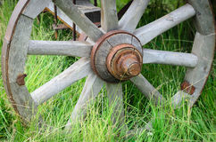 Old exhibit with the wagon wheel on a green grass. Wheel cart grass close-up Stock Image