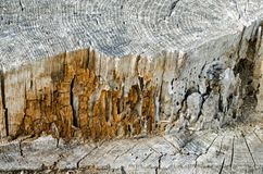 Exposed tree trunk showing pattern. Old exposed tree trunk showing wooden pattern Royalty Free Stock Image