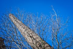 Old factory chimne. Y and tree without leaves on a blue sky Stock Images