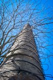 Old factory chimney. And tree without leaves on a blue sky Royalty Free Stock Photo
