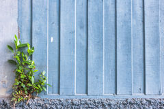 Old fade blue wood wall Stock Image