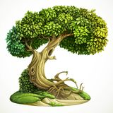 Old fairy ivy-covered deciduous tree on the hill with moss Stock Image