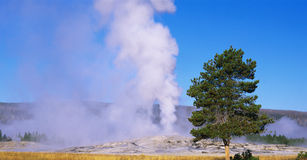 Old Faithful geyser. This is the famous Old Faithful geyser. The geyser is erupting at sunrise royalty free stock photography