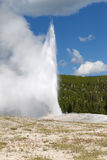 Old Faithful Geyser Erupting on Nice Summer Day Royalty Free Stock Photo