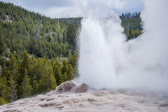 Old Faithful geyser erupting - Yellowstone National Park- Yellow Royalty Free Stock Photography