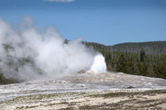 Old Faithful Geyser inYellowstone National Park USA Stock Image