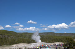 Old Faithful Geyser inYellowstone National Park USA Stock Images