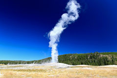 The Old Faithful Geyser in Yellowstone Royalty Free Stock Images