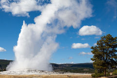 Old Faithful Geyser Yellowstone N.P. Royalty Free Stock Images