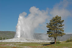 Old Faithful geyser, Yellowstone National Park Stock Photo