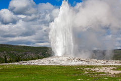 Old Faithful. Geyser in yellowstone national park Royalty Free Stock Photography