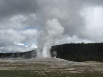 Old faithful geyser at yellowstone national park. Errupting with cloudy skies royalty free stock image