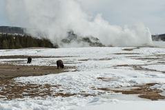 Old Faithful Geyser, Yellowstone NP Royalty Free Stock Images