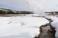Old Faithful Geyser, Yellowstone NP Royalty Free Stock Image