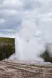 Old Faithful Stock Images