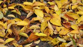 Old fallen autumn yellow leaves. Slider. Dolly shot. stock video footage