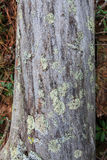 Old fallen dead tree closeup Royalty Free Stock Photo
