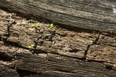 Small plants sprouting on fallen log royalty free stock image