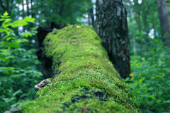 Old fallen tree covered with moss among grass Stock Photo