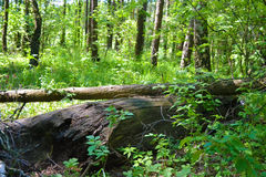Old fallen tree in a gree Stock Images