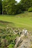 Old fallen tree in Knole park Stock Photo