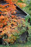 Old falling down shed near a country road. Old wooden building sagging with time surrounded by trees showing turning leaves Royalty Free Stock Images
