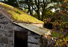 Old farm building with moss covered roof. Lean-to building on old Welsh mountain farm with mossy roof stock photo