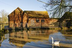 An old farm building and pond, hertfordshire, england. reflection. An old working farm outhouse with pond and guard goose on patrol in a hertfordshire village stock images