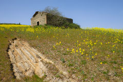 Old Farm In Canola Field Royalty Free Stock Images