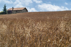 Old farm in Catalunya (Spain). At summer royalty free stock photos