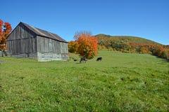 Old farm Royalty Free Stock Photo