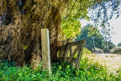 Old farm fence next to a massive tree being over grown with shrubs Stock Photography