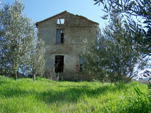 Old farm house in olive grove Stock Photo