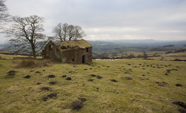 Old farm house ruin Stock Images