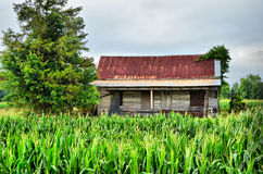 Old Farm House Sitting in Corn Field. Old ruins of family farm house sitting in the middle of a corn field Royalty Free Stock Photography