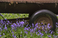 Old farm machinery in vibrant bluebell forest royalty free stock photography
