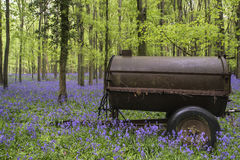 Old farm machinery in vibrant bluebell Spring forest landscape Stock Image