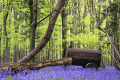 Old farm machinery in vibrant bluebell Spring forest landscape Stock Images