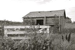 Old farm shed surrounded by weeds and fences(black and white) Stock Images