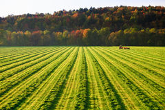 Old farm tractor in a field. Old farm tractor in a mowed field in Stowe Vermont, USA stock photo