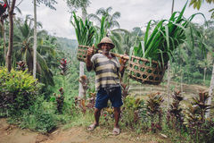 Old farmer carrying a yoke on his shoulders Royalty Free Stock Image