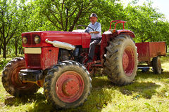 Old farmer driving his tractor. Senior farmer driving his old tractor with trailer through a plum trees orchard Royalty Free Stock Photo