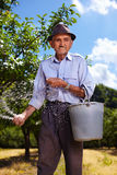 Old farmer fertilizing in an orchard. Senior farmer doing seasonal work, spreading fertilizer in a plum trees orchard Stock Photo