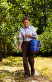Old farmer fertilizing in an orchard Royalty Free Stock Photography