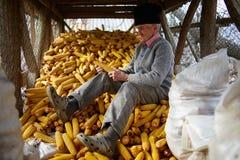 Old farmer in his maize barn Stock Photo