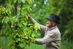 Old farmer in his orchard Royalty Free Stock Photo